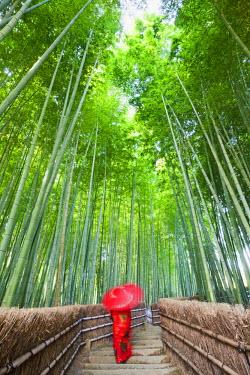 TPX21079 Japan, Kyoto, Arashiyama, Adashino Nembutsu-ji Temple, Bamboo Forest