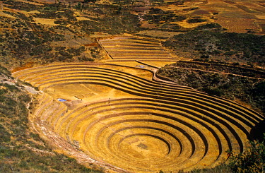 PER33582 Peru, Andes, Cordillerra Urubamba, Urubamba, Moray. Striking Inca terraces - believed to have been a kind of crop nursey - fill an amphitheatre-like bowl in the hills near Maras.