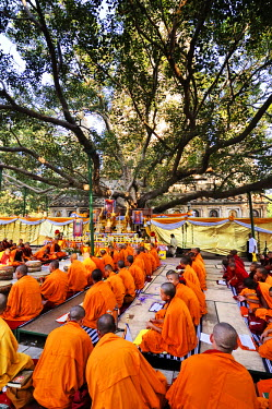 IND6280AW Tibetan monks in Bodhgaya, praying under the sacred Buddha banyan tree. It was here that the Buddha had the enlightenment. India