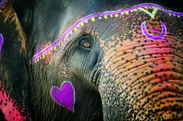 IND6288AW Elephant's eye. Sonepur Mela, India
