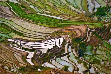 AS07_CCR0923 Asia, China, Yunnan, Yuanyang. Pattern of rice terraces at Laohu Zui (Tiger's Mouth) near Mengpin Village.