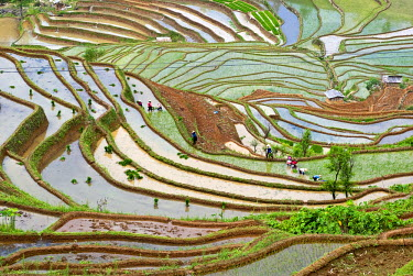AS07_CCR0928 Asia, China, Yunnan, Jinping. Native Yi people plant flooded rice terraces near Laomeng Town.