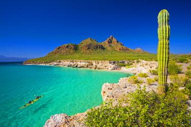 SA13_GLU0009 Mexico, Baja, Sea of Cortez. Sea Kayakers, white sand beach and Cardon Cactus of Isla Carmen. (MR).