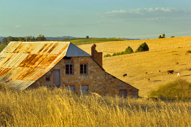 AU01_JMI0139 Old abandoned stone house in rolling hills with vineyards in background seen on corner of Schroeder and Windsor Roads near Hahndorf, Adelaide Hills, South Australia, Australia.