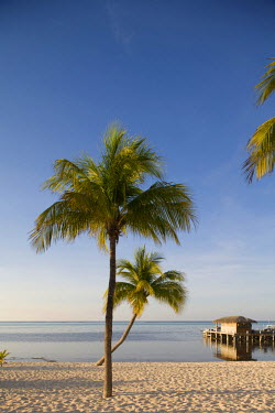 CA42_PSO0070 Cayman Islands, Little Cayman Island, Morning sun lights palm tree along white sand beach along Caribbean Sea
