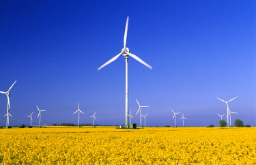 GER0450AW Rape field and wind turbines, Fehmarn Island, Schleswig-Holstein, Germany