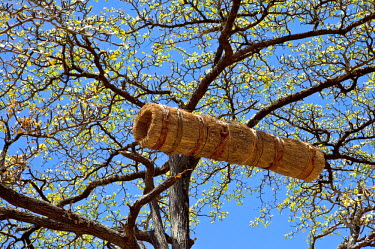 KEN7522 A traditional Pokot beehive or honey barrel.  The hollowed-out tree trunk is wrapped in grass to keep it cool in the very hot climate of the low-lying areas of Pokot country.