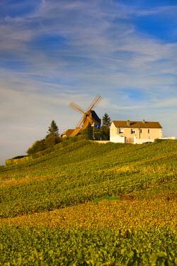 FR01837 France, Marne, Champagne Ardenne, Verzenay, windmill and vineyards