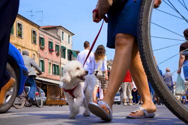 IT9188AW Dog, Corso del Popolo, Chioggia, Venice, Veneto, Italywoman