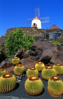 SPA3674AW Jardin de Cactus, Lanzarote, Canary Islands, Spain