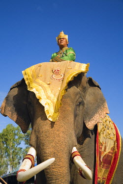 THA0239 Thailand, Surin, Surin.  Suai mahout and his elephant in costume dress during the Surin Elephant Roundup festival.  The event held in November sees hundreds of elephants involved in a celebration of t...