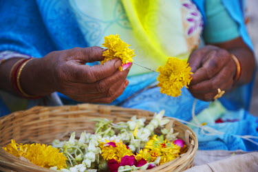 IND6763AW Woman preparing flower offerings, Udaipur, Rajasthan, India