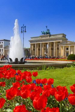 DE01422 Quadriga Brandenburger Tor, Brandenburg Gate and Tulips in Pariser Platz, Berlin, Germany, Europe