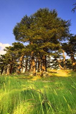 LB02066 Lebanon, Kadisha Valley, Bcharre, Cedar Forest