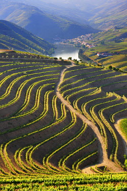 POR6453AW Terraced vineyards in the Douro region, a Unesco World heritage site. Portugal