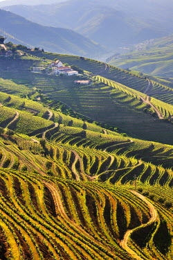 POR6455AW Terraced vineyards in the Douro region, a Unesco World heritage site. Portugal
