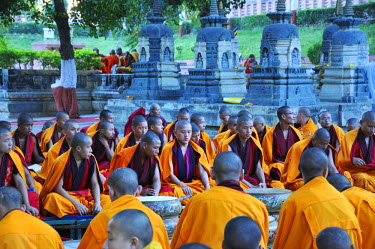 IND6842AW Tibetan monks in Bodhgaya, praying under the sacred Buddha banyan tree. It was here that the Buddha had the enlightenment. India