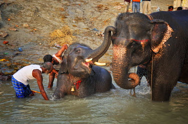 IND6845AW The elephant's bath. Sonepur Mela, India