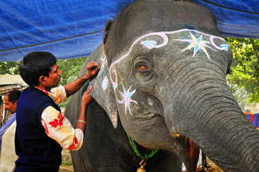 IND6846AW Elephant painter. Sonepur Mela, India
