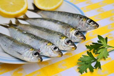 POR6592AW Fresh sardines from Setubal. Portugal