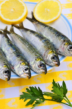 POR6593AW Fresh sardines from Setubal. Portugal