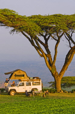 MW1442 Malawi, Thyolo.  Camping overland style with a roof tent fitted to a safari landrover beneath majestic Acacia abyssinica trees at a tea plantation.  (MR)