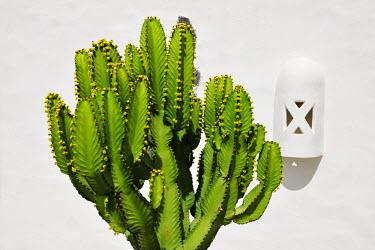 SPA3962AW Cactus. Lanzarote, Canary Islands