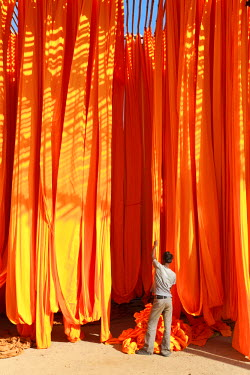 IN05352 Newly dyed fabric being hung up to dry, Sari garment factory, Rajasthan, India, (MR/PR)
