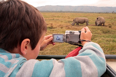 KEN7688 Boy photographing white rhino from a vehicle in Oserian Wildlife Sanctuary, near Lake Naivasha, Kenya.