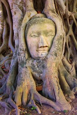 THA0373AW Thailand, Ayutthaya, Wat Mahathat, Buddha head in tree