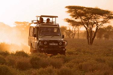 TZ3282 Safari vehicle on a game drive at dusk in the Ndutu region of the Serengeti National Park, Tanzania.