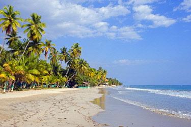 HAT0006 The Caribbean, Haiti, Port of Prince, Jacmel, palm tree studded beach