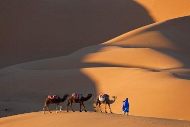 MC02523 Camels & Dunes, Erg Chebbi, Sahara Desert, Morocco