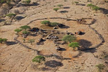 KEN7716 A traditional homestead of a large Samburu family.  The Samburu are semi-nomadic pastoralists who live in northern Kenya.