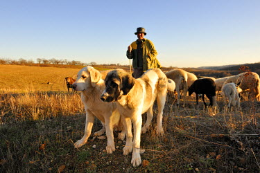 POR6706AW A shepherd in Tras os Montes. Portugal