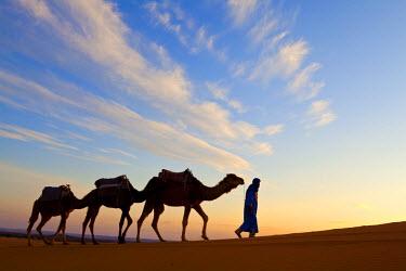 MC02580 Camel Driver, Sahara Desert, Merzouga, Morocco, (MR)