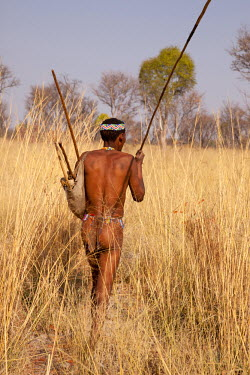 AF31_BJA0279_M Africa, Namibia, Bushmanland, Nhoma. Bushman hunter walking in tall Bushman grass