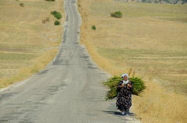 AS37_CMI0608_M Turkey, Eastern Turkey, Adiyaman. Mount Nemrut (aka Nemrut Dagi). Old women with wood along the road to Mt. Nemrut.