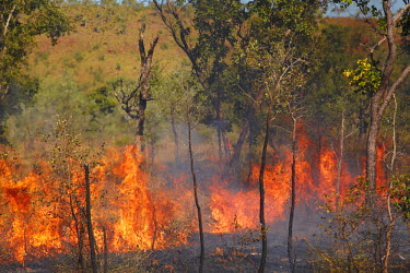 AU01_DWA4194_M Wildfire, Victoria Highway, near Victoria River, Gregory National Park / Jutpurra National Park, Northern Territory, Australia