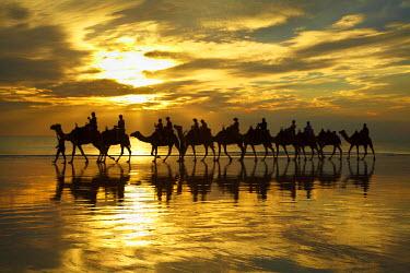 AU01_DWA4280_M Tourist camel train on Cable Beach at sunset, Broome, Kimberley Region, Western Australia, Australia