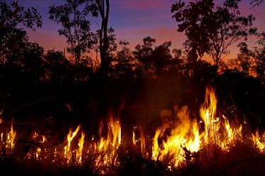 AU01_DWA4501_M Bushfire at dusk, Litchfield National Park, Northern Territory, Australia