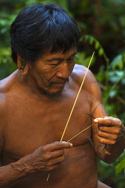 SA07_POX1879_M Huaorani Indian - Mipo Wira. Gabaro Community with curari blowgun darts. Yasuni National Park. Amazon rainforest, Ecuador.
