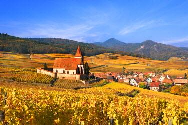 FRA7286AW The vineyards at Hunawihr, Alsace, France