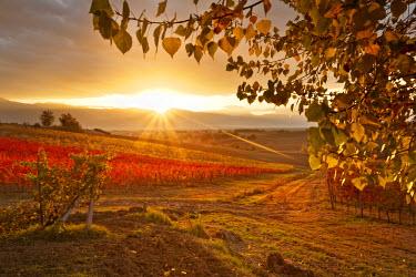 ITA1130AW Italy, Umbria, Perugia district. Autumnal Vineyards near Montefalco