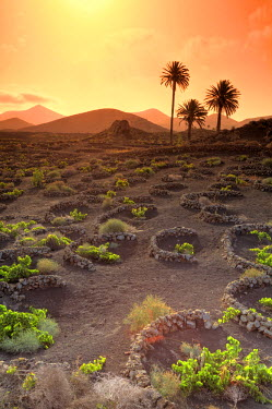 ES16084 Spain, Canary Islands, Lanzarote, Timanfaya National Park, Malvasia Wine Plantation