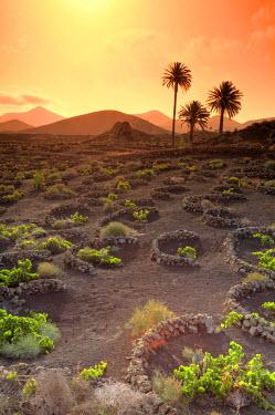 ES16084 Spain, Canary Islands, Lanzarote, Timanfaya National Park, Malvasia Wine Plantation