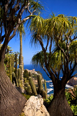 MNC0162 Exotic Garden in Principality of Monaco, Europe
