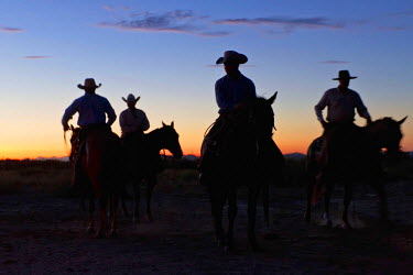 US44LNO0127 USA, West Texas, Cowboys at daybreak on a West Texas, USA ranch on a cattle roundup day.