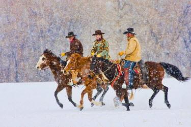US51TEG0017 USA, Wyoming, Shell, Cowboys and Cowgirl riding snowfall. (MR)
