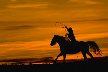 US51TEG0037 USA, Wyoming, Shell, Cowboy riding in the Sunset with lariat Rope. (MR)